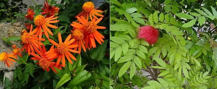 14花.jpg