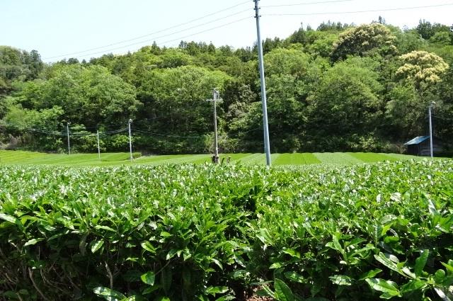 「茶ピア」3.jpg