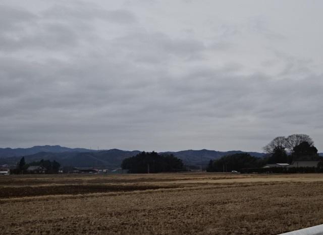 いちご1.jpg