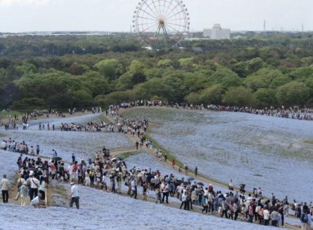 ひたち海浜公園10.jpg