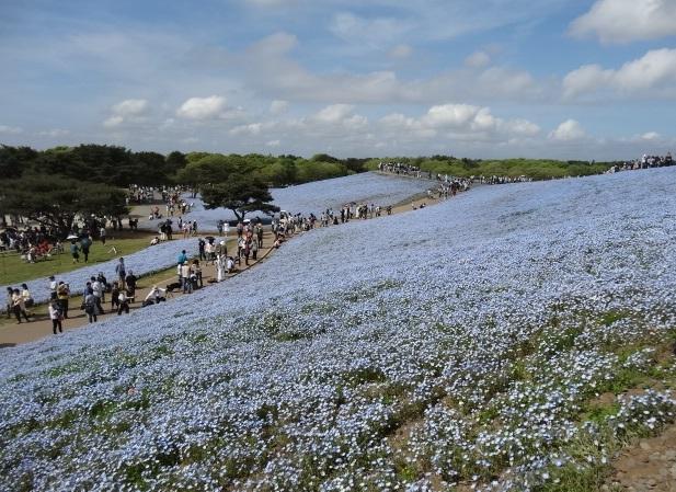 ひたち海浜公園9.jpg
