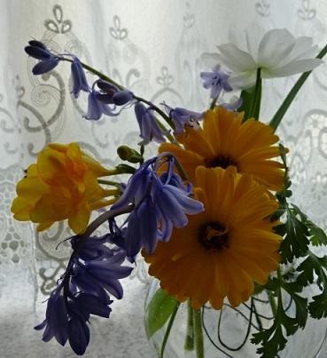 ソラマメ9.jpg