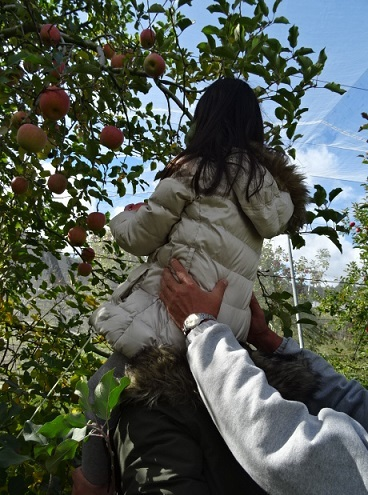 リンゴ狩り6.jpg