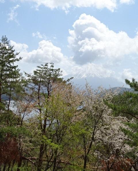 富士5.jpg