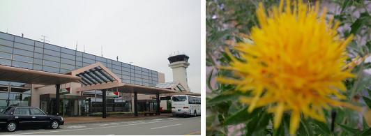 山形空港&紅花.jpg