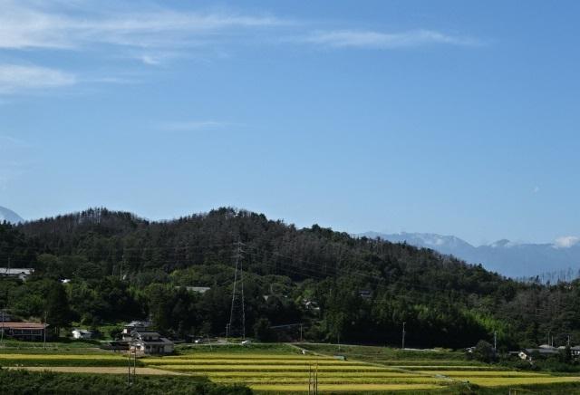 松本7.jpg