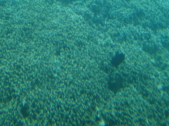 水中2.jpg