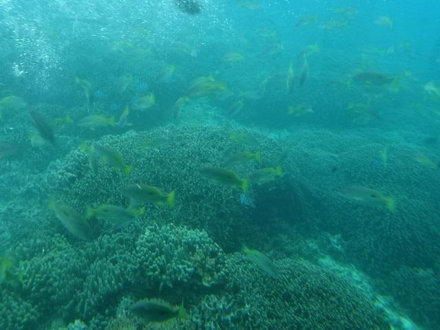 水中6.jpg