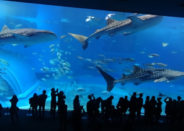 美ら海水族館1.jpg