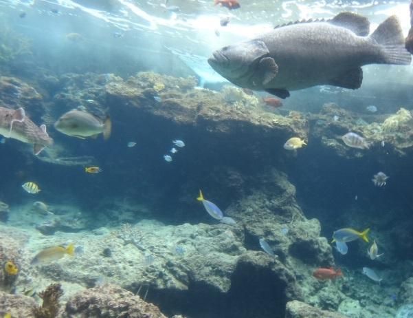 美ら海水族館4.jpg