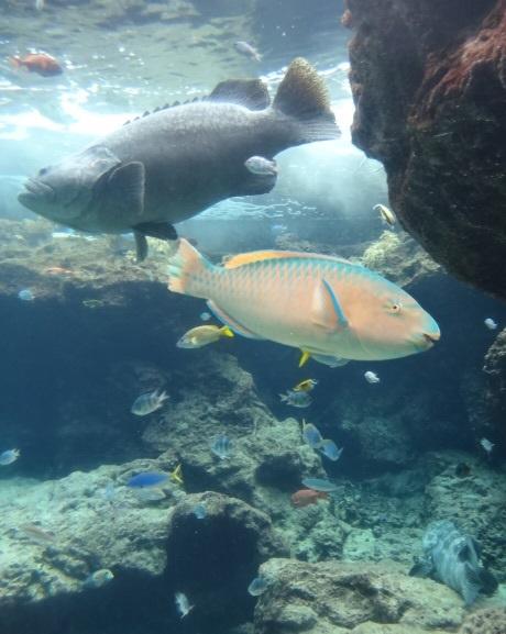 美ら海水族館5.jpg