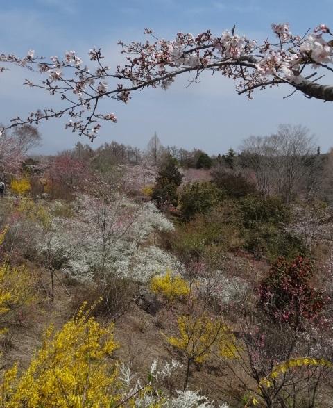 花の山0.jpg