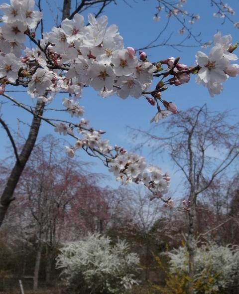 花の山12.jpg