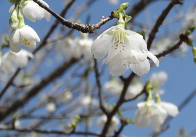 花の山16.jpg