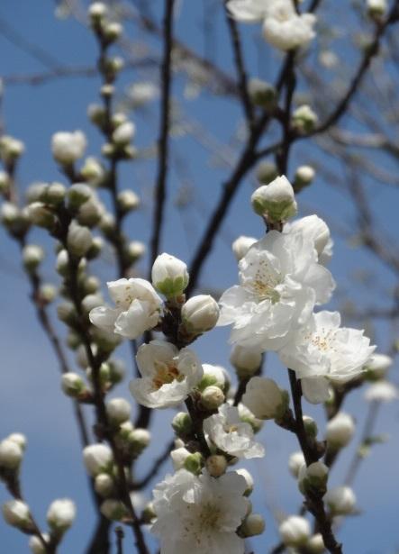 花の山18.jpg