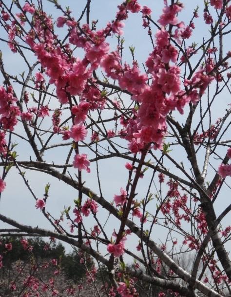 花の山3.jpg