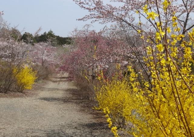 花の山6.jpg
