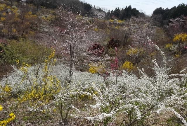 花の山7.jpg