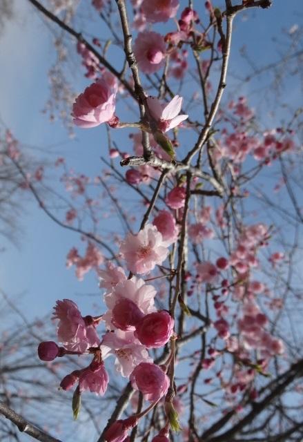花の山9.jpg