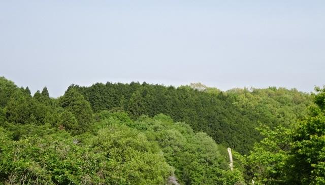 蕨採り3.jpg