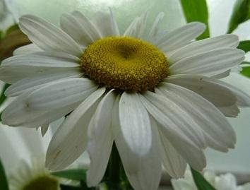 6白い花.jpg